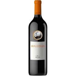 Malleolus Magnum 2018